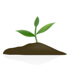 young plant in dark soil vector image