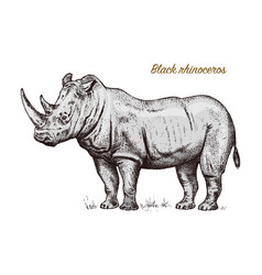 African rhinoceros wild animal on white background vector