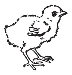 Chick vintage vector