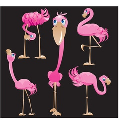 Flamingos cartoons vector