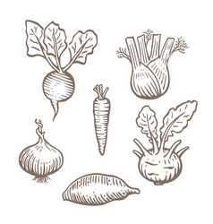 Hand drawn root vegetables set vector