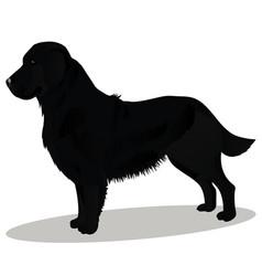 Black retriever dog vector