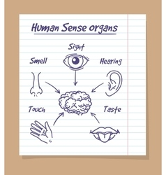 Five senses sketch on notebook page vector