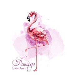 flamingo in watercolor isolated exotic vector image