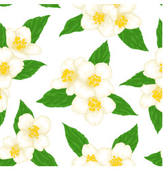 seamless branch flower jasmine with green vector image
