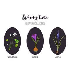 Spring flowers set crocus muscari wood sorrel vector