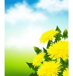 Yellow dandelions vector