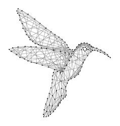 hummingbird colibri flying bird from abstract vector image