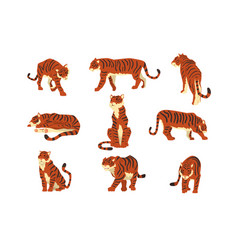 powerful tiger in different actions set cartoon vector image