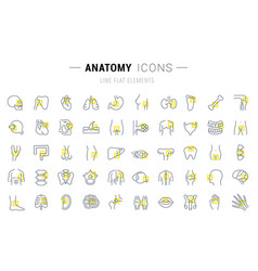 set line icons anatomy vector image