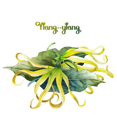 Watercolor ylang ylang vector