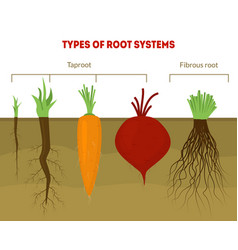 cartoon types root systems card poster vector image