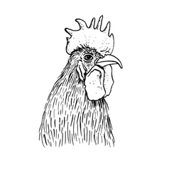ink drawing head of cock vector image