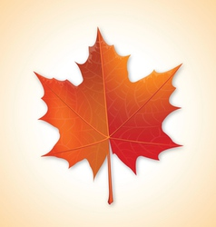autumn maple leaf on colorful background vector image vector image
