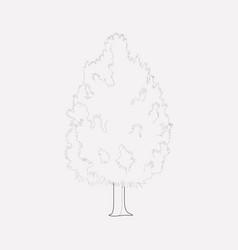Cedar icon line element of vector