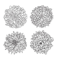 floral decorations set vector image