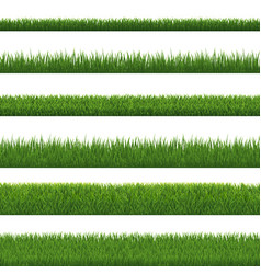 green grass border and white background vector image