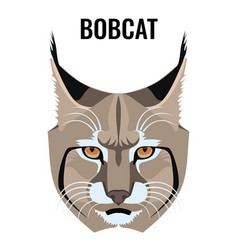 Portrait of bobcat isolated on vector
