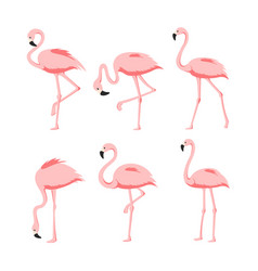 set of beautiful elegant pink vector image