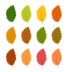 set of twelve autumn leave vector image