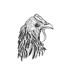 ink drawing head of chiken vector image