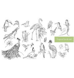 realistic hand drawn contour collection of vector image