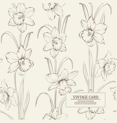 botanical of daffodil vector image