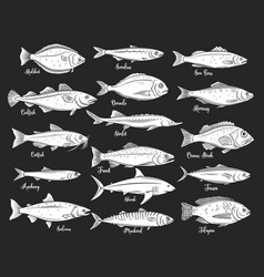 Silhouettes fish seafood retro icons vector