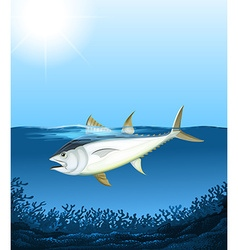 Tuna swimming in the sea vector image