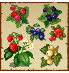 Great berry set mix of six types of berries vector image