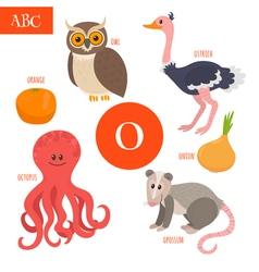 Letter O Cartoon alphabet for children Owl opossum vector image