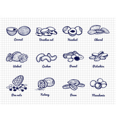 nuts sketch hand drawn popular nuts set vector image