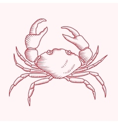Detailed drawing of a sea crab vector image