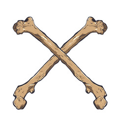 crossed bones - hand drawn vector image