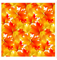Seamless pattern bright yellow autumn maple leaves vector