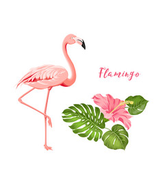 Beautiful tropical image with pink flamingo and vector