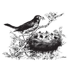 Birds vintage vector