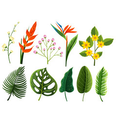 Different types of flowers and leaves vector