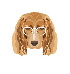 Irish setter breed dog in white glasses isolated vector