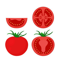 tomato set isolated on white vector image