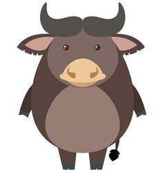 gray buffalo on white background vector image