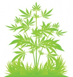 isolated cannabis plants vector illustration vector image vector image