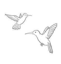 Colibri vector image