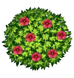 Red flowers on round bush vector image vector image