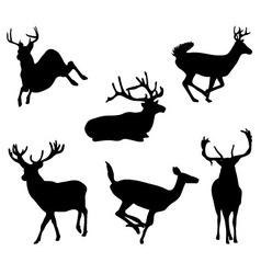 Deers vector