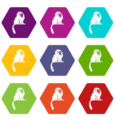 Hairy monkey icon set color hexahedron vector