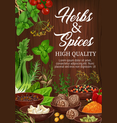 Spices and herbs culinary flavoring seasonings vector
