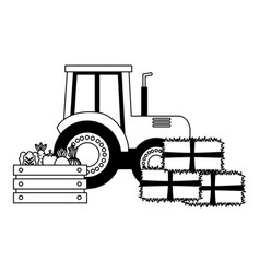 tractor truck bales of hay and vegetables vector image