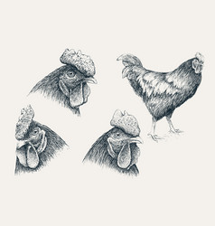 collection of rooster heads vector image vector image