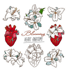 Set of stylized anatomical human heart and white vector